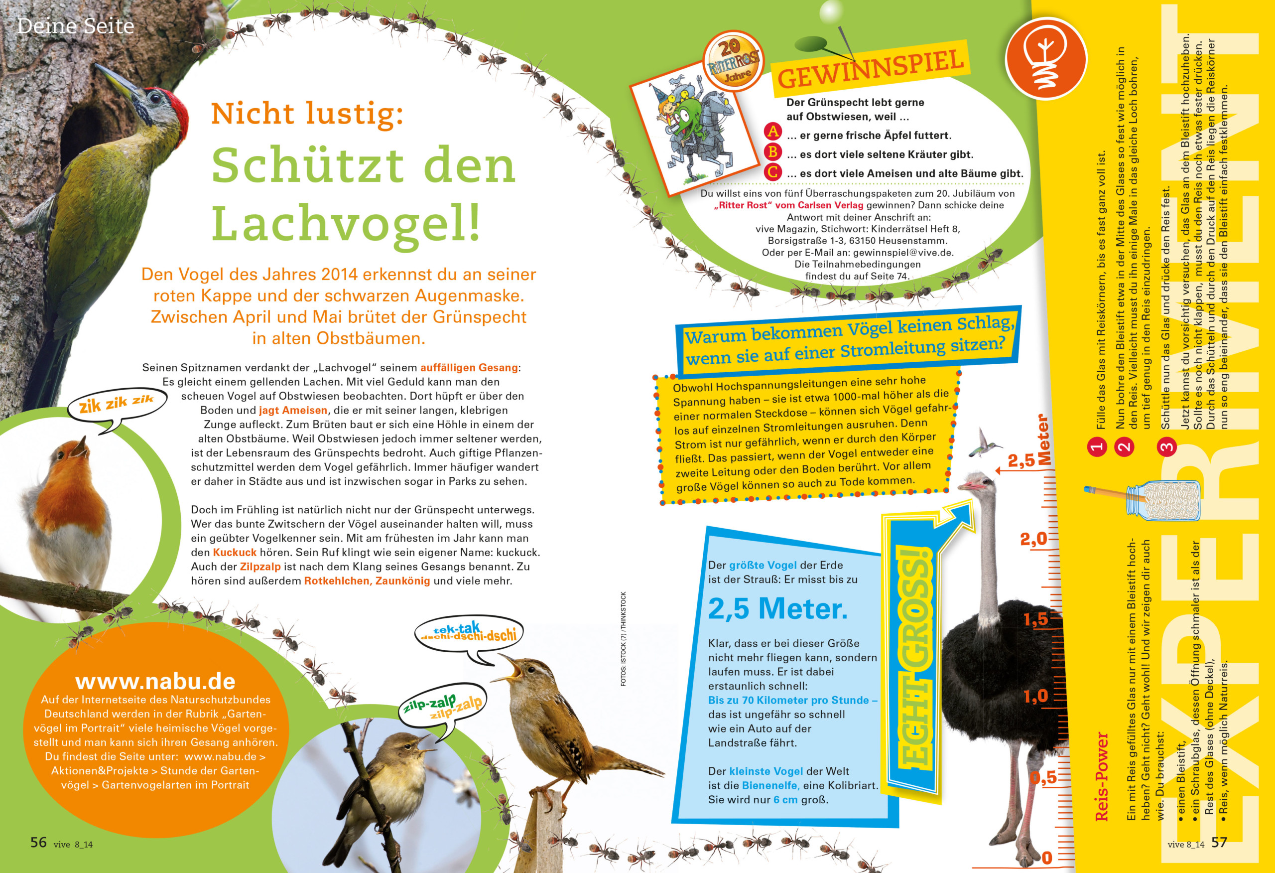 VIVE / ALPHEGA Kundenmagazin – Kinderseiten -Thema Vögel