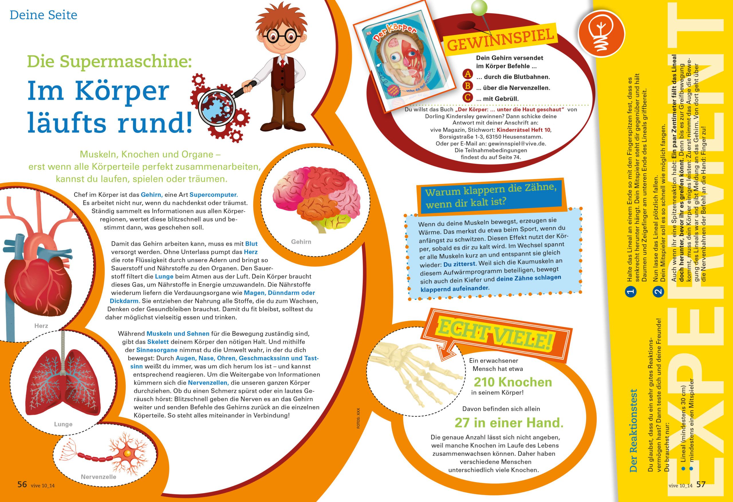 VIVE / ALPHEGA Kundenmagazin – Kinderseiten -Thema Körper
