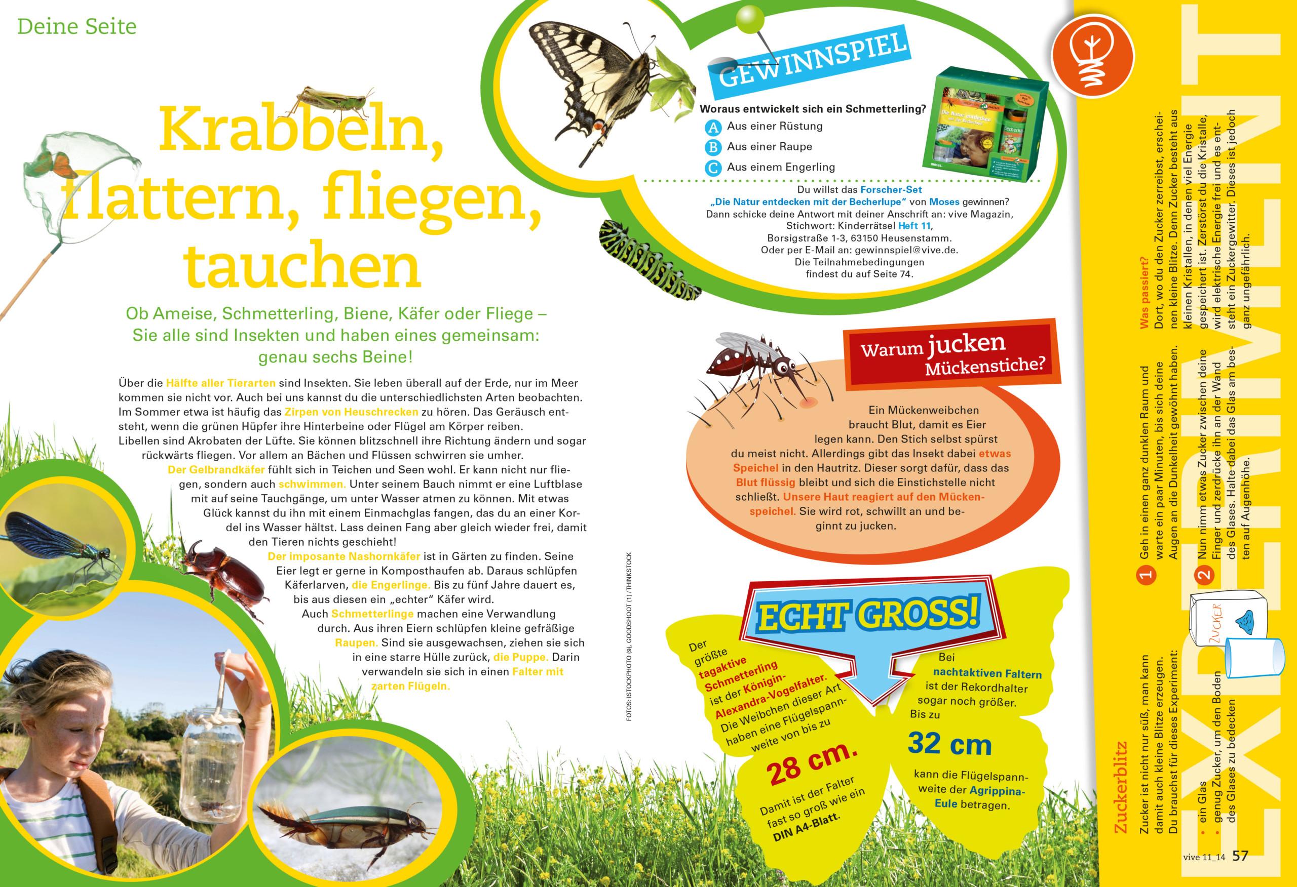 VIVE / ALPHEGA Kundenmagazin – Kinderseiten Thema Insekten